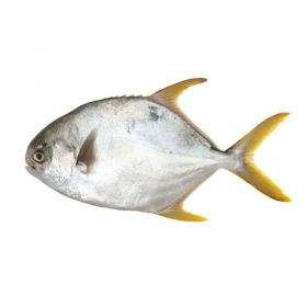Seelans Superstore Golden Pomfret 400g