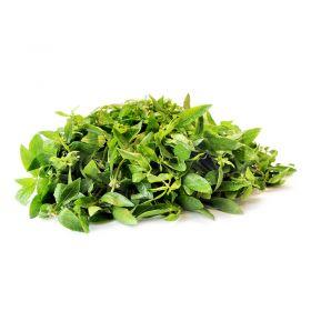 Fresh Alternanthera (Ponnanganni Keerai) Leaves,mukunuwenna, Ponnankani