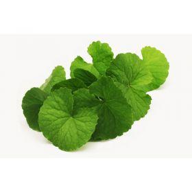 Fresh Brahmi Leaves (Vallarai Keerai) Memory Plant
