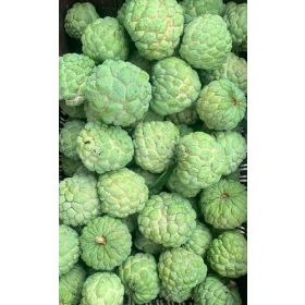 Fresh Custard Apple 500G