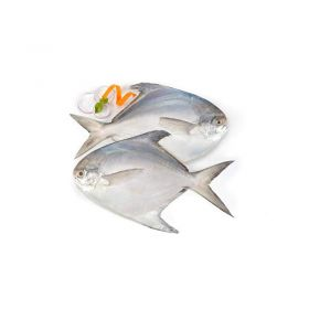 Seelans Superstore Black Pomfret 700g